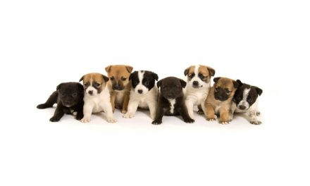 Looking for a New Puppy? Then the BBC Wants to Hear From You…